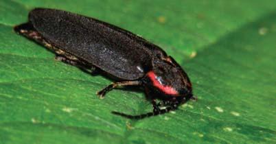Photo of Verimli elektrik ateşböceği