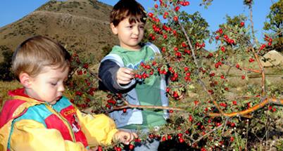 Photo of Her Bitkinin Şifası Kendi Mevsimine Özeldir:Alıç
