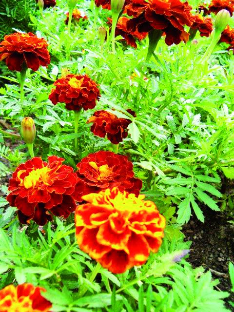 Balkonda bahçe