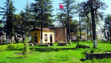 Photo of Söğüt İçin 9 Sebep