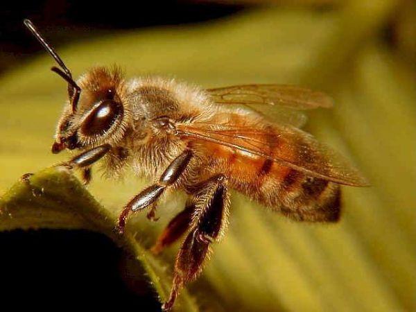 Photo of Arının Bal Yapma Sırrı