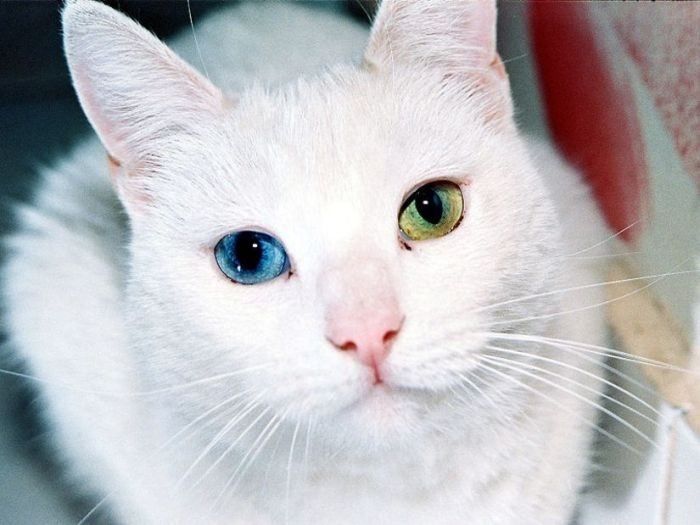 Photo of Ciğerci Kedisi
