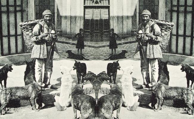 Photo of Bir Sokakta Kaç Kedi/Köpek Barınabilir