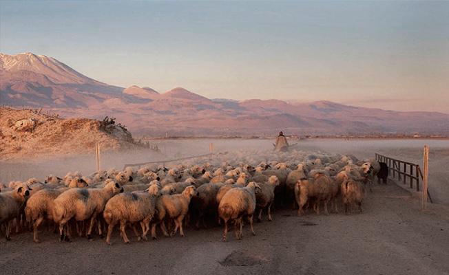 Photo of Çobanlar