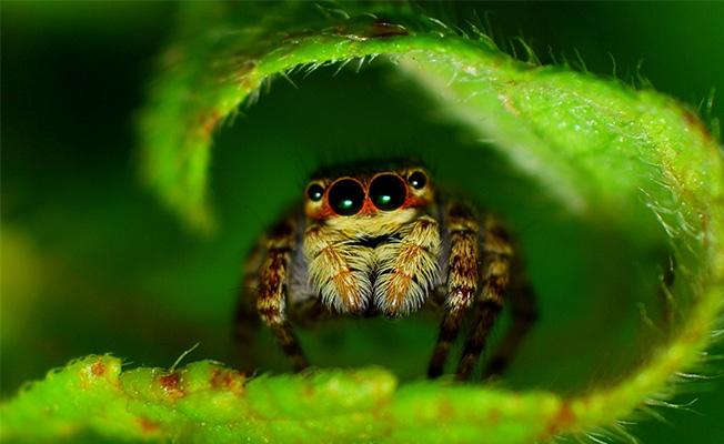 Photo of Davetsiz Misafirler: Böcekler