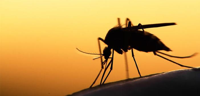 Photo of Sivrisinekler İnsan Seçer mi?