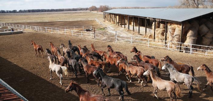 Photo of Orta Asya'da Kımız Tedavisi