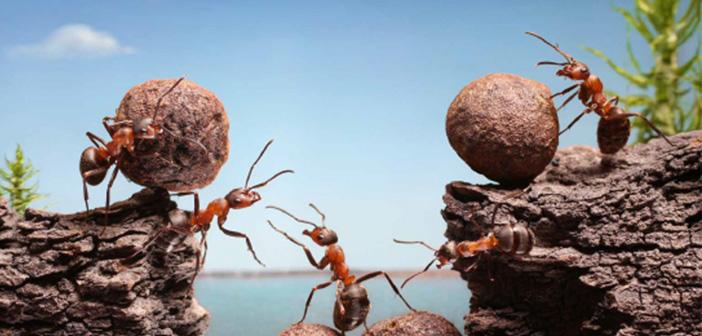 Photo of 'Ben' Değil 'Biz' Diyen Karıncalar