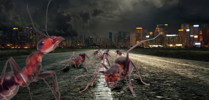 İnsan İncitmeyen Karıncalardan, Karınca İnciten İnsanlara