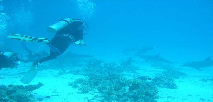 Photo of Su Altı Dünyasında Muhteşem Bir İntizam Var