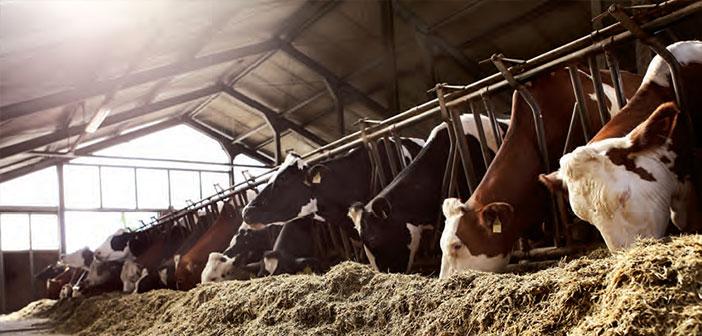 """Photo of """"Tahılca Zengin Yemle Beslenen Hayvanlar Tercih Edilmeli"""""""
