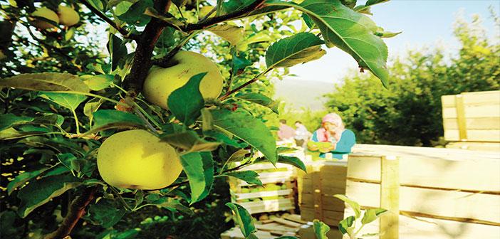 Photo of Yazdan Kışa Bayramiç'te Elma