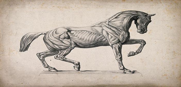 """Photo of Atların Kitabı  """"Baytarname"""""""