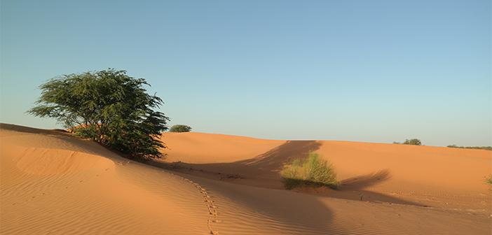 Photo of Çölün Hayali Moritanya