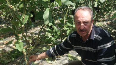 Photo of Yüksek Verim, Üreticiyi Cezbetti