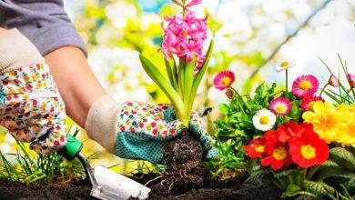 Photo of Çiçek Yetiştiricileri
