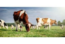 Photo of Hayvancılığa Yatırım Yapacaklara Tavsiyeler!