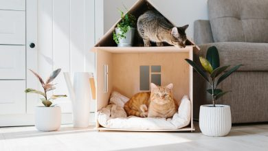 Photo of Apartmana Sıkışan Kedi ve İnsan